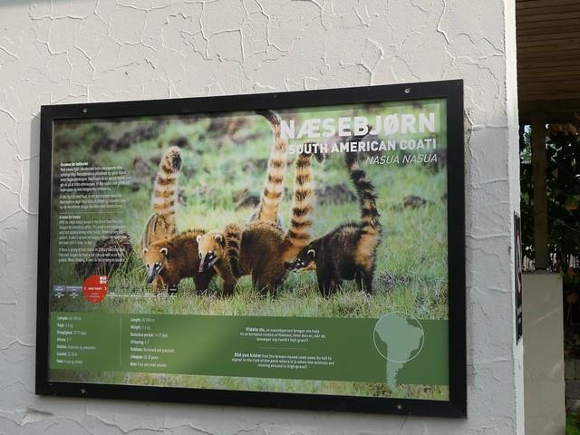 Nasenbär, Zoo Givskud