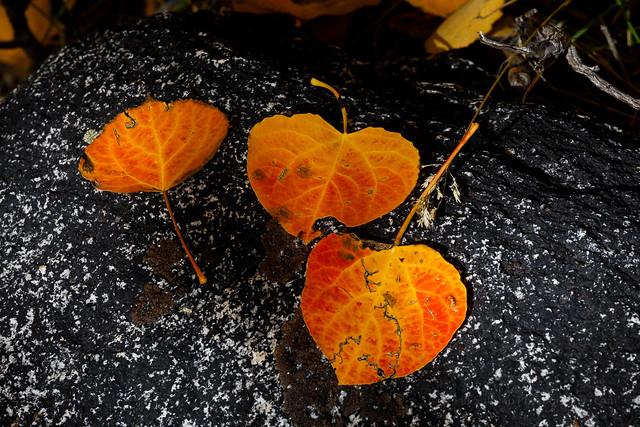 Fall Colors on Black Rock