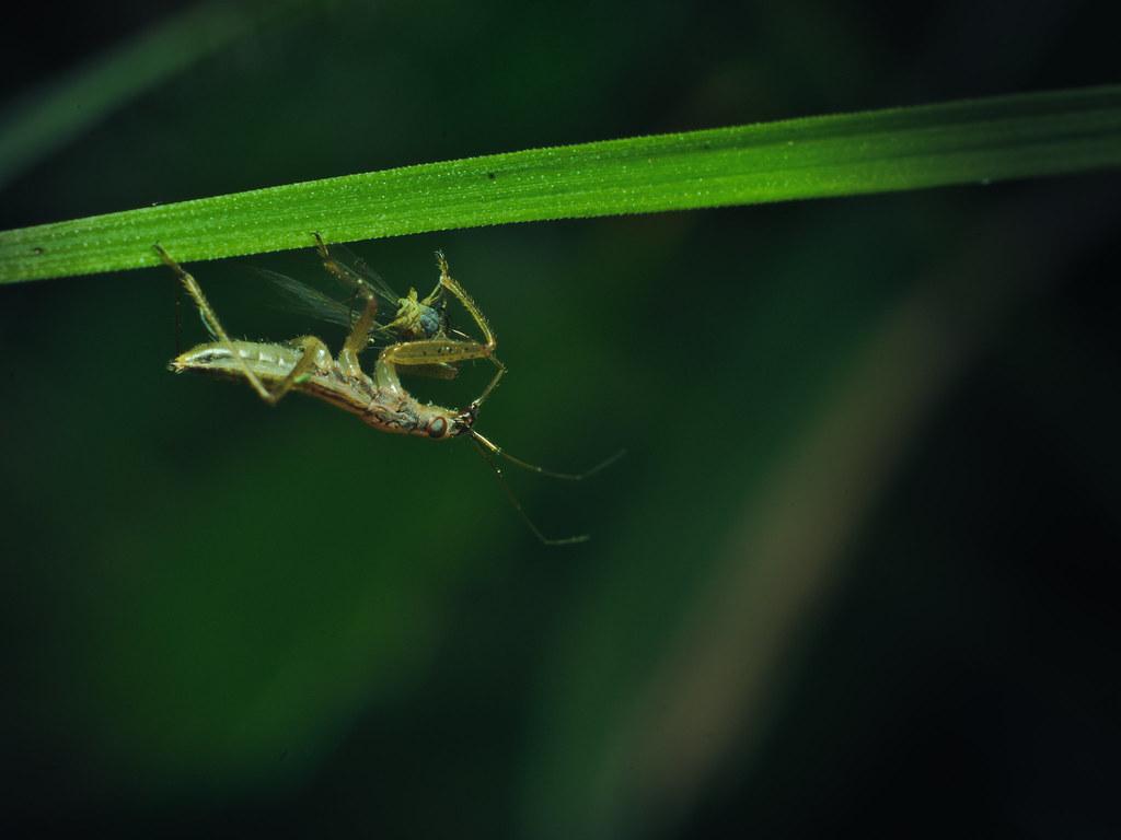 A bug oft prey