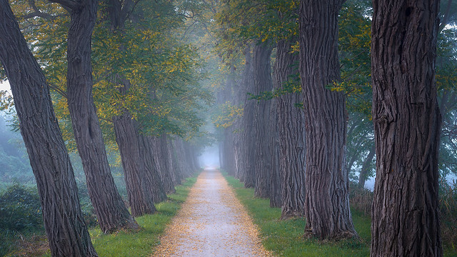 Foggy road, Goirle, The Netherlands