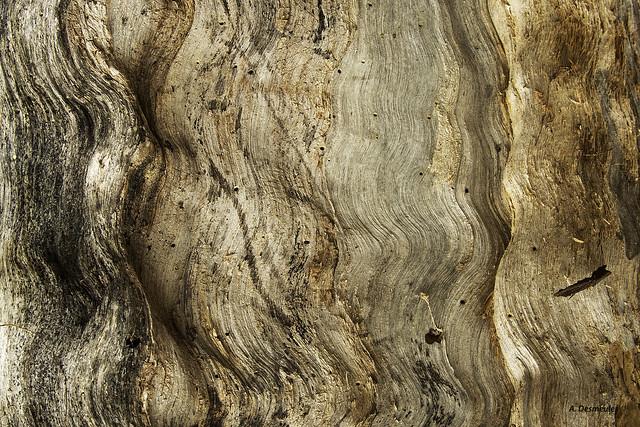Texture (Explore), Nikon D500, AF-S Nikkor 28-300mm f/3.5-5.6G ED VR