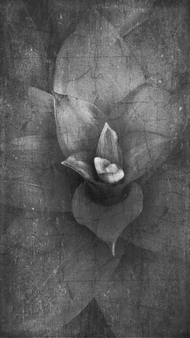 Floragraph 141