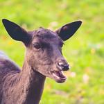 Animal Bokeh - Schleswig-Holstein - Deutschland