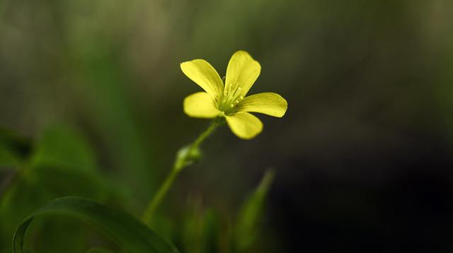 September 21 - micro flower