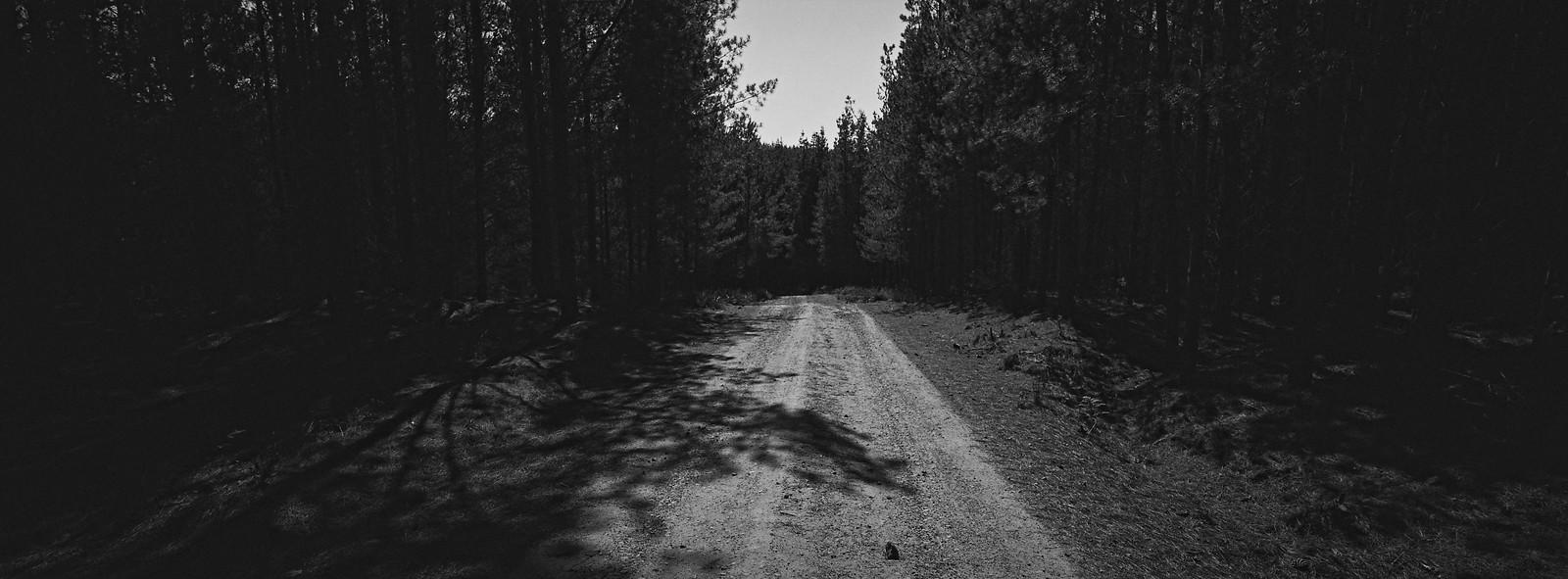 Belanglo State Forest iv