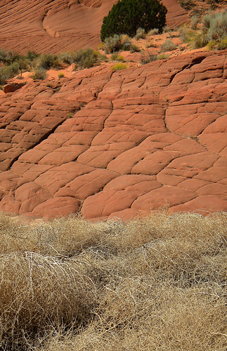 Red rock 'pillow' formations and a pile of tumbleweed up front at Buckskin Gulch, a hike on the Utah-Arizona Borderlands
