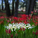 White and Red by shinichiro*