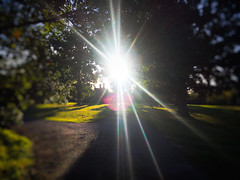 Sunbeams 12