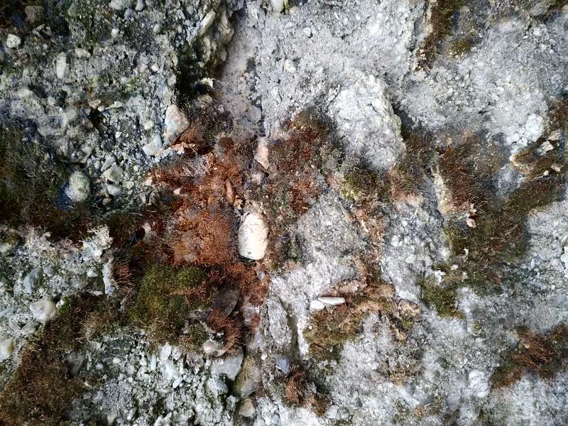 Concrete texture #03