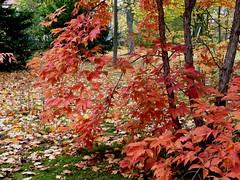 Die Natur zeigt ihre Farben