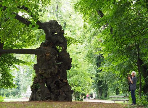 Pottendorf Wasserschloss Schloss-Parkanlage