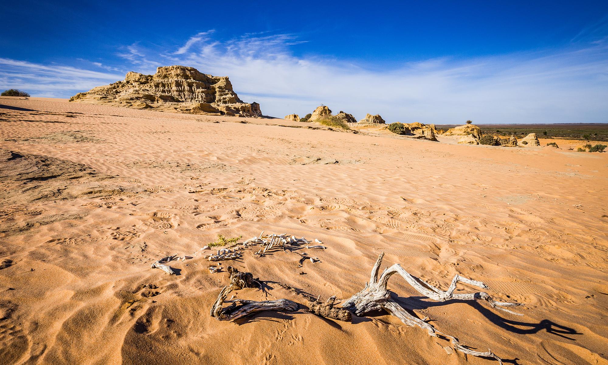 sand-dunes-bones