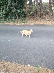 IMG_20180916_083113 - Photo of Montner