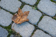 A Lone Dead Leaf on a Brick Sidewalk