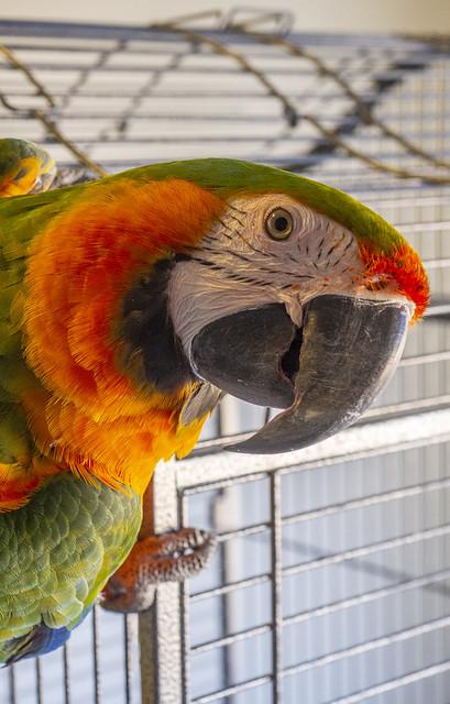 The evil parrot