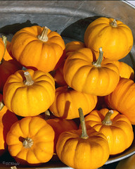 Bucket of pumpkins_3015