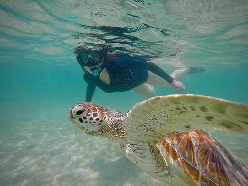 Friendly Sea Turtle
