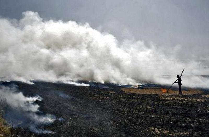 मोहाली के एक गाँव में जलता हुआ पराली
