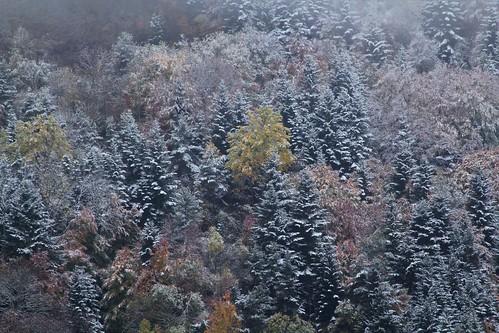 Couleurs d'automne - 2018 45676591021_6086fb7375
