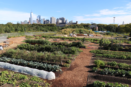 GrowNYC's Governors Island Teaching Garden Overview