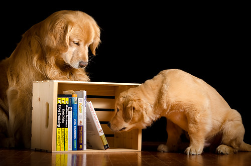 Education of a Puppy 43/52