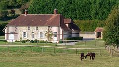 Paysage de Haras (3) - Photo of Avoine