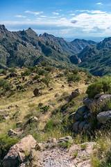 1809 Grassy Hillsides down into Sabino Canyon on the Box Camp Trail