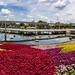 <p><a href=&quot;http://www.flickr.com/people/myfrozenlife/&quot;>myfrozenlife</a> posted a photo:</p>&#xA;&#xA;<p><a href=&quot;http://www.flickr.com/photos/myfrozenlife/31517958818/&quot; title=&quot;Epcot - Flower &amp;amp; Garden Festival Pano&quot;><img src=&quot;http://farm2.staticflickr.com/1915/31517958818_089dca7a8b_m.jpg&quot; width=&quot;240&quot; height=&quot;109&quot; alt=&quot;Epcot - Flower &amp;amp; Garden Festival Pano&quot; /></a></p>&#xA;&#xA;<p>Epcot, Walt Disney World</p>