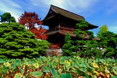 Zenkō-ji 115