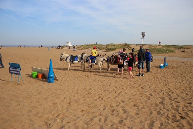 Donkeys on the beach at Skegness