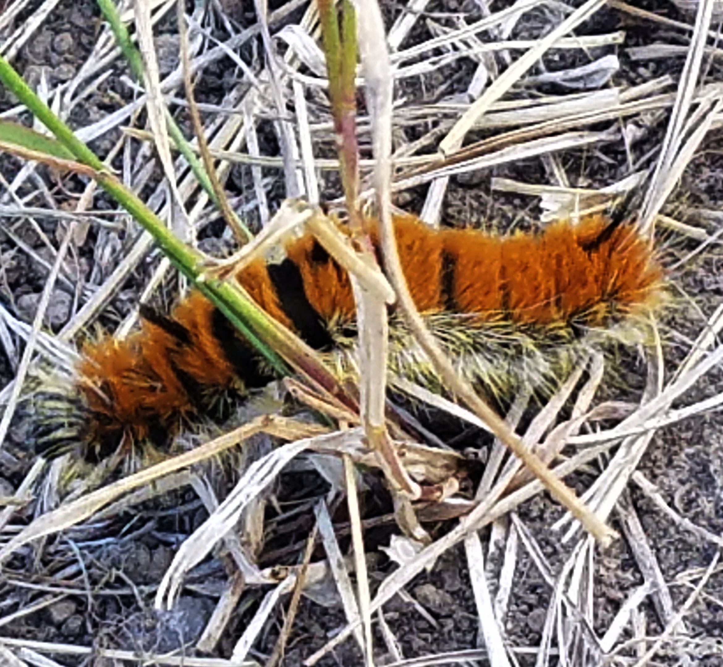Fuzzy Caterpillar - Fall in Leavenworth | Tracy Maie Lewis | www.stuffnthingz.com