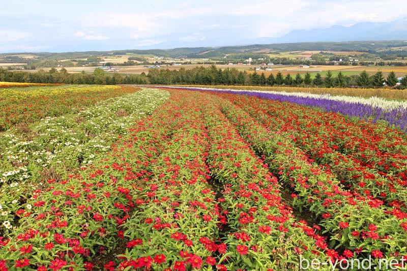 th_flowerland02