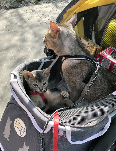 roryfreddy-stroller_3277