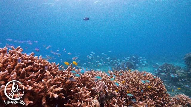サンゴと熱帯魚たちに癒やされましたね♪