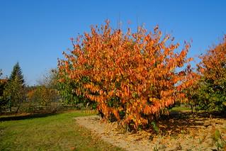 Jesień - Autumn DSCF8595.jpg silky