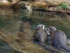 otterfamily