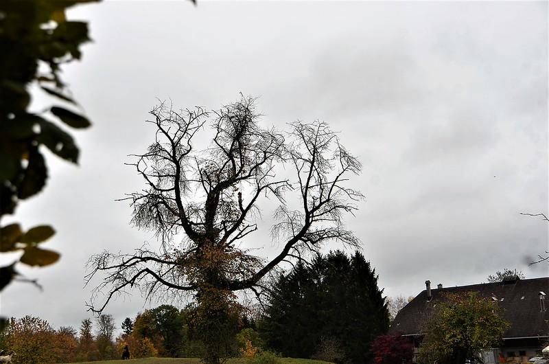 Tree Baselstrasse 28.10.2018