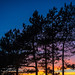 Solent Trees at Sunset by fstop186