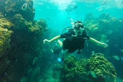 Entre corales