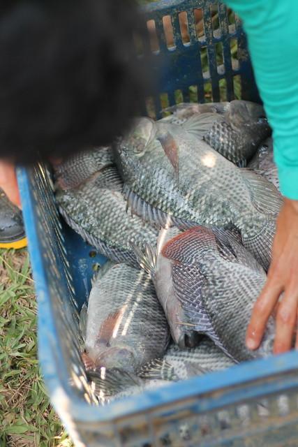 Produtores rurais e empreendedores aprendem sobre a produção de peixes