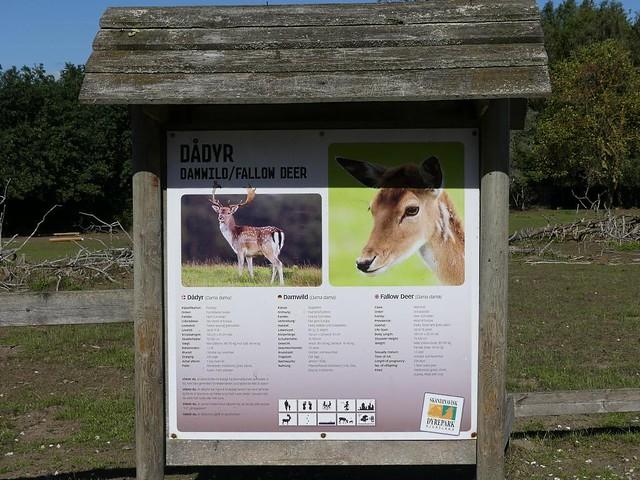 Dammwild, Skandinavisk Dyrepark Kolind
