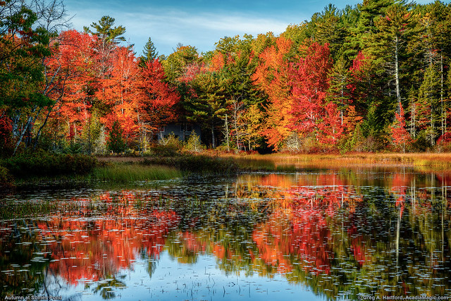 Autumn at Somes Pond