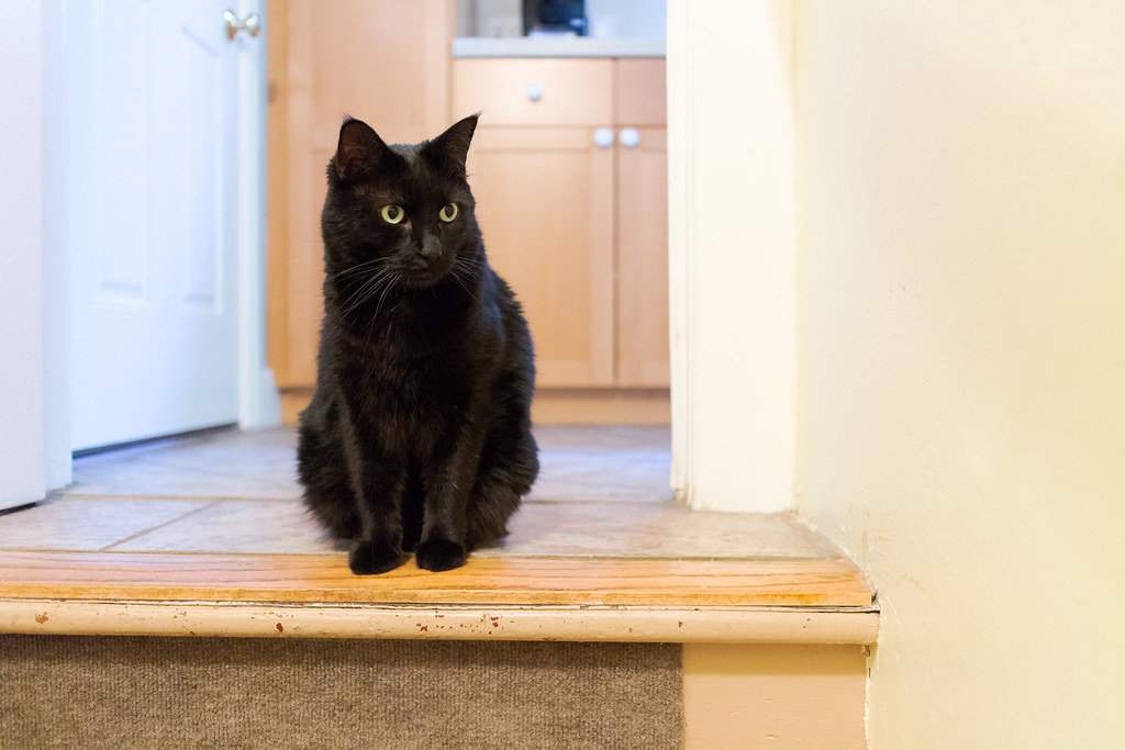 Our black cat Emma sits at the top of the stairs between the kitchen and the basement, watching our new kitten Boo (not in the picture) as he climbs the stairs towards her