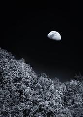 Moon Rise at Big Basin