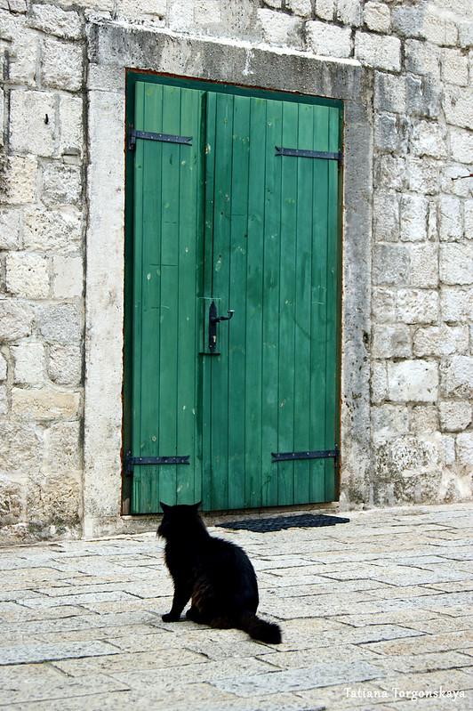 Кот, сидящий перед входом в здание