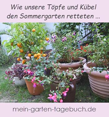 Topfgarten - zum Pinnen