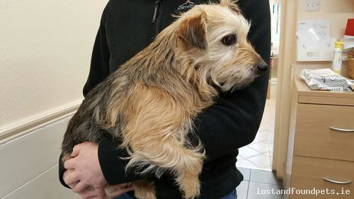Wed, Oct 31st, 2018 Found Female Dog - R164, Moynalty Road, Meath