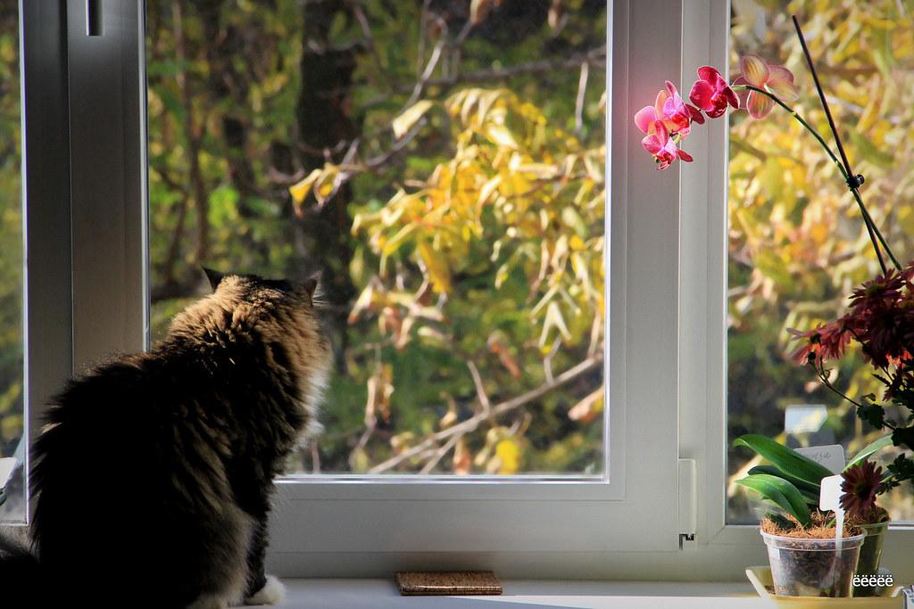 Window in Autumn