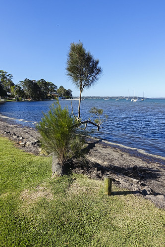 Lake Macquarie Shore