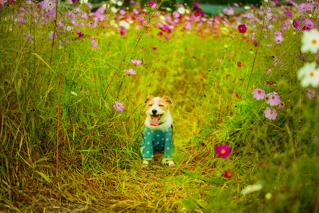 Smiling in the flower Field